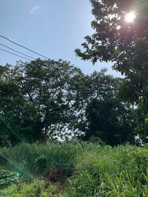 100 by 100 Not Far From the Road at Egba Community. | Land & Plots For Sale for sale in Edo State, Benin City