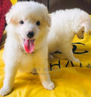 1-3 Month Male Purebred Samoyed | Dogs & Puppies for sale in Lagos State, Oshodi