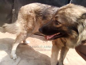Dog Breeding and Grooming Services | Pet Services for sale in Abuja (FCT) State, Apo District