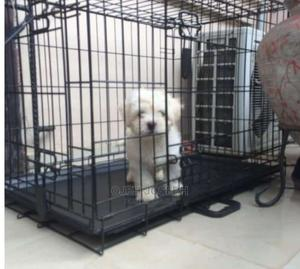 1-3 Month Female Purebred Lhasa Apso | Dogs & Puppies for sale in Ondo State, Akure