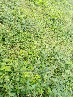 2632sqm at Guzape (Residential Plot) | Land & Plots For Sale for sale in Abuja (FCT) State, Guzape District