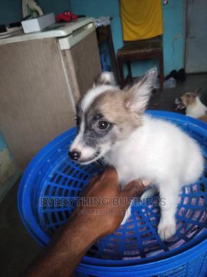 Puppy Day Care | Pet Services for sale in Lagos State, Isolo