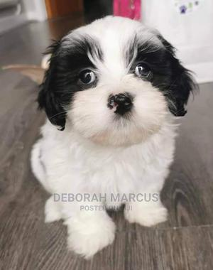 1-3 Month Female Purebred Lhasa Apso | Dogs & Puppies for sale in Cross River State, Calabar