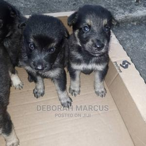1-3 Month Female Purebred German Shepherd | Dogs & Puppies for sale in Cross River State, Calabar