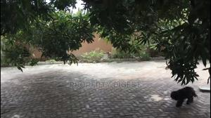 5bdrm Bungalow in Wuse for Sale | Houses & Apartments For Sale for sale in Abuja (FCT) State, Wuse