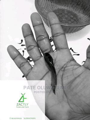 Fingerlings And Jumbo. | Fish for sale in Oyo State, Ibadan