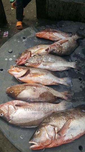 Red Sniper | Fish for sale in Delta State, Warri