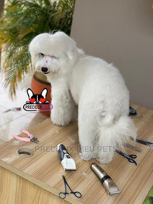 Miniatures Poodle Grooming Services   Pet Services for sale in Lagos State, Lagos Island (Eko)