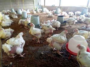 Buy Quality And Affordable Chicken (Free Delivery) | Livestock & Poultry for sale in Abuja (FCT) State, Kubwa