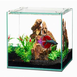 Complete Affordable Aquariums - Instant Delievry + Fishes | Fish for sale in Lagos State, Surulere