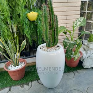 Fiber Artificial Cactus Plant for Sale   Garden for sale in Lagos State, Ikeja