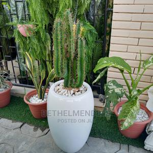 Artificial Cactus Plant for Sale   Garden for sale in Lagos State, Ikeja