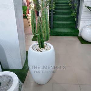 Beatiful Fibre Quality Cactus Plant for Sale   Garden for sale in Lagos State, Ikeja
