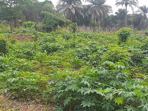 Land for Sale | Land & Plots For Sale for sale in Edo State, Esan North East