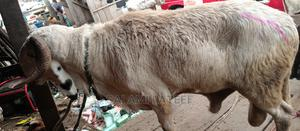 Healthy Big Ram | Livestock & Poultry for sale in Lagos State, Yaba