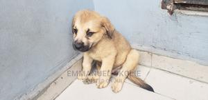 1-3 Month Male Mixed Breed Caucasian Shepherd | Dogs & Puppies for sale in Delta State, Uvwie