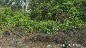 Acres Of Land For Sale At Adamo, Ikorodu. | Land & Plots For Sale for sale in Lagos State, Ikorodu