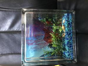 Mini Table Top Aquarium ( 9 X 9.5 X 3 Inches ) Imported | Fish for sale in Lagos State, Yaba