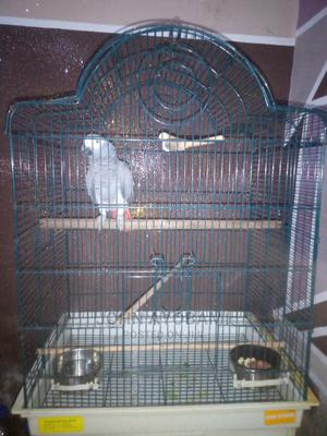 Grey Parrot With Cage | Birds for sale in Lagos State, Ikorodu