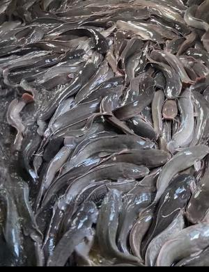 Fresh and Dried Catfish | Fish for sale in Delta State, Udu