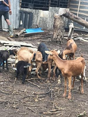 Goat Ranch (Land Plus 25 Adult Goats) | Commercial Property For Sale for sale in Lagos State, Ikorodu