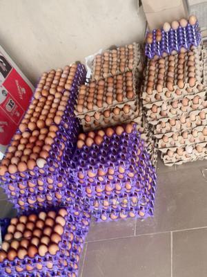 Fresh Eggs | Livestock & Poultry for sale in Kano State, Kumbotso