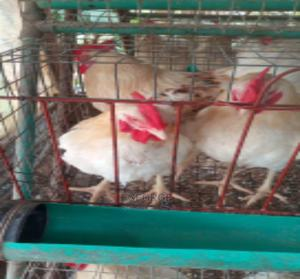 Matured Cockerels | Livestock & Poultry for sale in Lagos State, Ipaja