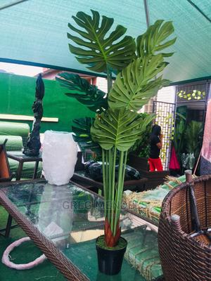 Fanciable Potted Monstera Green Plant | Garden for sale in Lagos State, Ikeja