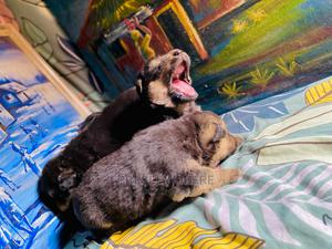 1-3 Month Female Purebred German Shepherd | Dogs & Puppies for sale in Abuja (FCT) State, Kubwa