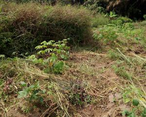 Plots of Land at Apete Ibadan for Sale | Land & Plots For Sale for sale in Oyo State, Ibadan