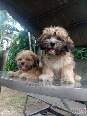 1-3 Month Female Purebred Lhasa Apso | Dogs & Puppies for sale in Ogun State, Ijebu