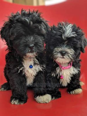 1-3 Month Male Purebred Lhasa Apso | Dogs & Puppies for sale in Ogun State, Ijebu