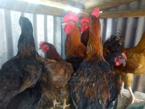Noiler Cockerel | Livestock & Poultry for sale in Abuja (FCT) State, Apo District
