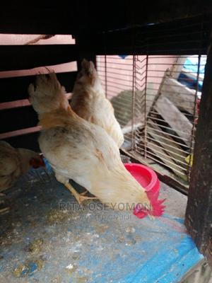 Cockrell and Broiler | Birds for sale in Lagos State, Yaba