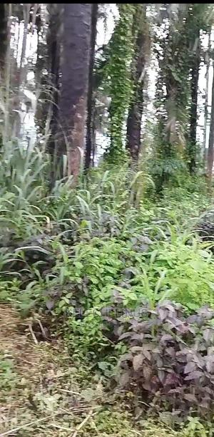 1 Plot of Land at Amaoba Umudike | Land & Plots For Sale for sale in Abia State, Umuahia
