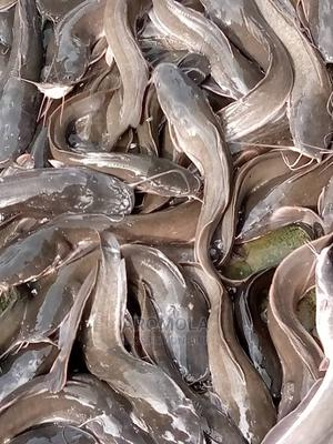 A Fish Farm   Commercial Property For Sale for sale in Ogun State, Ado-Odo/Ota