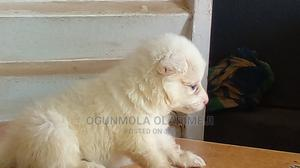 Pet House Agro Veterinary Clinic   Pet's Accessories for sale in Lagos State, Alimosho