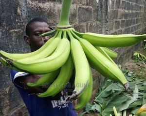 Malaysian Giant Plantain Suckers   Feeds, Supplements & Seeds for sale in Ogun State, Ado-Odo/Ota