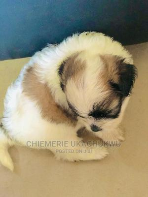 Dr Emerson Vet Doctor | Pet Services for sale in Lagos State, Kosofe