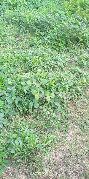Land for Sale | Land & Plots For Sale for sale in Ondo State, Owo