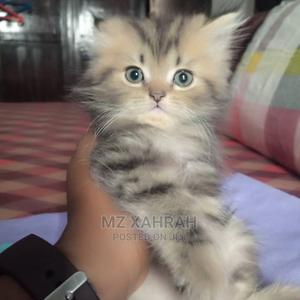 1-3 Month Male Purebred Persian | Cats & Kittens for sale in Lagos State, Ikeja