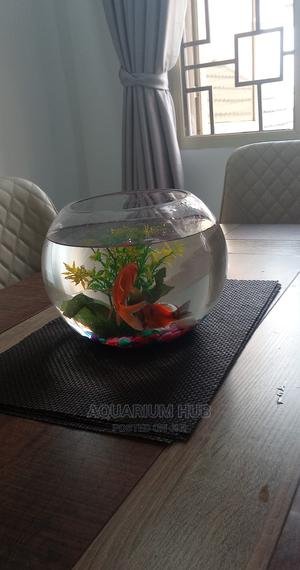 Fish Bowl Aquarium | Fish for sale in Lagos State, Ikoyi