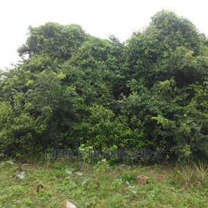 5 Acres of Farmlands at Sami Village Omi Adio Ibadan | Land & Plots For Sale for sale in Oyo State, Ibadan