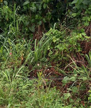 2plots of Land for Sale on Hakeem Balogun Street Agidingbi | Land & Plots For Sale for sale in Lagos State, Ikeja
