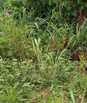 Cheap Half Plot of Land for Sale at Off College Rd Ogba | Land & Plots For Sale for sale in Lagos State, Ikeja