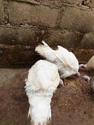 Brelia Turkeys   Livestock & Poultry for sale in Osun State, Osogbo