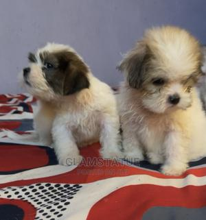 1-3 Month Male Purebred Lhasa Apso | Dogs & Puppies for sale in Ogun State, Ijebu Ode