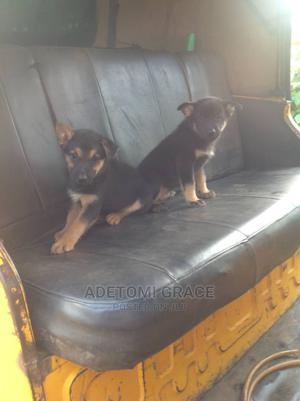 1-3 Month Female Purebred German Shepherd | Dogs & Puppies for sale in Ogun State, Ijebu Ode