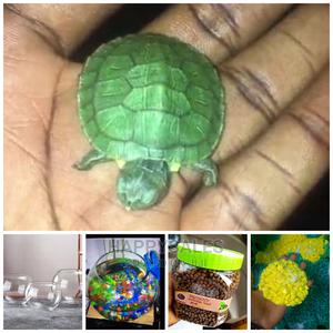Turtle With Full Kit   Reptiles for sale in Lagos State, Surulere