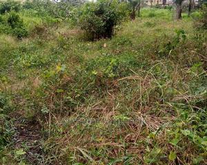 Land Ownership | Land & Plots For Sale for sale in Enugu State, Enugu
